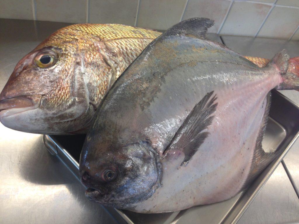 マナガツオ、天然真鯛